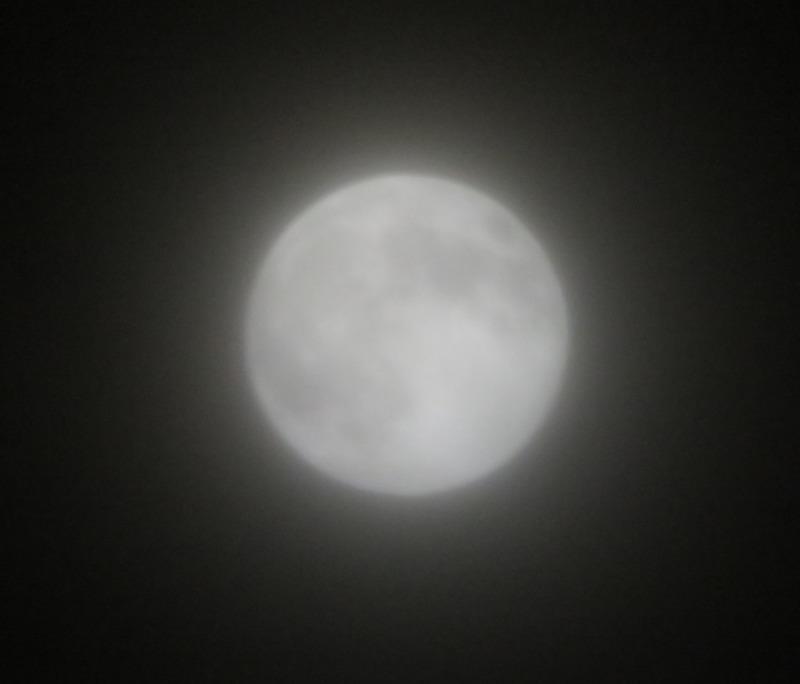 20190219満月まであと1時間20分くらい.JPG