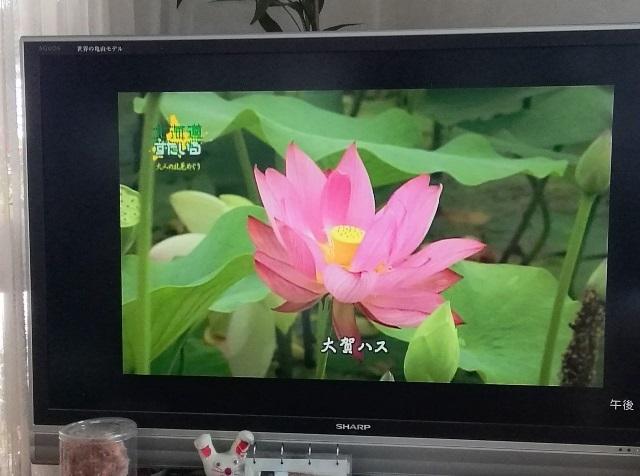 20180326市田さんの大賀ハス.jpg
