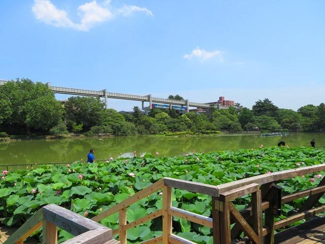 20180625千葉公園.jpg