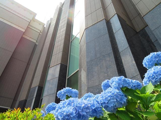 ホテルエミシアのアジサイ2.jpg
