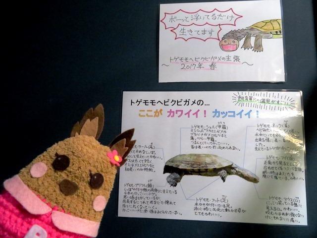 北の大地の水族館 トゲモモヘビクビガメ説明.jpg